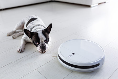 Robotic,Vacuum,Cleaner,Hoovering,Home,With,Dog,Lying,On,The,掃地機