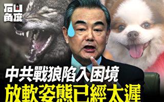 【有冇搞错】中共战狼陷困境 放软姿态已太迟