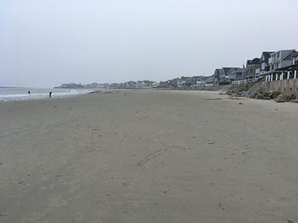 缅因州海滩惊现百万死虫