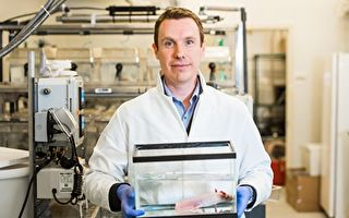 科學家找到器官和肢體再生信號
