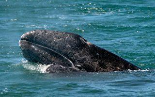 被鲸鱼吞 男子回顾惊魂30秒
