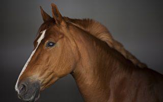 法国灵性马匹变医生 以天赋抚慰重症病患