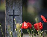 新诗:红色罂粟花