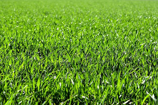 為什麼草會讓人們覺得癢?