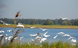 散落人間的文字:在鳥聲喧譁中 尋找寧靜