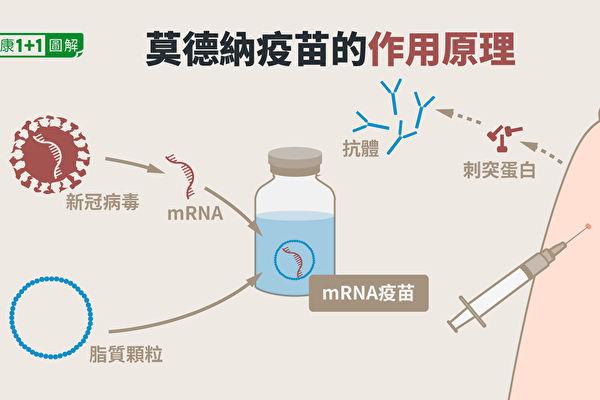 莫德纳疫苗(mRNA疫苗)的作用原理。(健康1+1/大纪元)