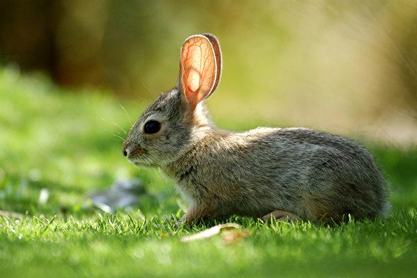 动物宝宝藏后院 切勿盲目拯救