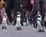 《企鵝小鎮》影評:拍攝企鵝的紀錄片 也能很有故事性