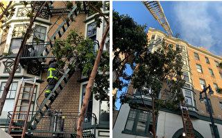 旧金山田德隆公寓火警 15人受伤、60人流离失所