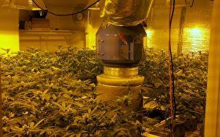大麻屋罚逾10万元 律师给房东一点建议