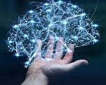哈佛专家:吃5种食物 提高大脑认知和记忆力