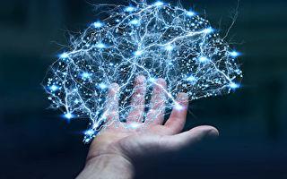 哈佛專家:吃5種食物 提高大腦認知和記憶力
