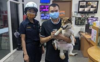萌柴迷路跳警車「報案」 人狗團聚超開心