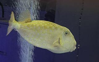 疗愈有趣的画面 海科馆生物喂食秀