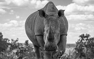 2500万年前巨型犀牛 重20多吨比长颈鹿还高