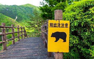 日本小学生意外跟野熊道早安 熊被吓跑了