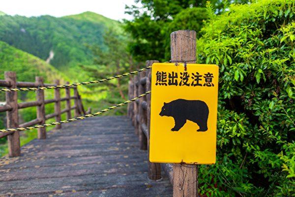 日本小學生意外跟野熊道早安 熊被嚇跑了