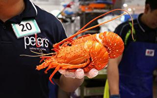 龍蝦為何成國安風險?澳洲向港府討說法