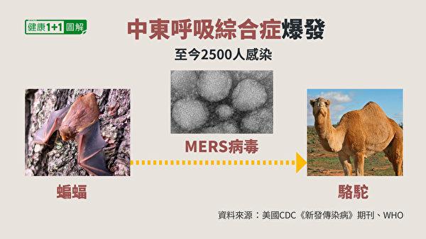 科學家經過實驗室分析認為,MERS病毒來源於單峰駱駝。(健康1+1/大紀元)