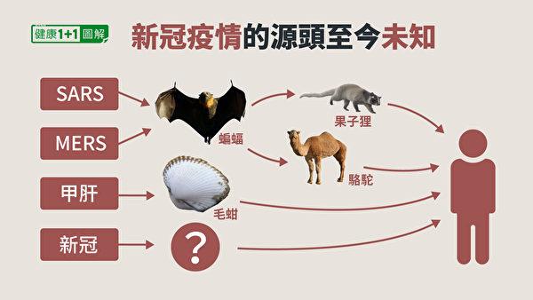 關於新冠病毒自然來源的可能性,目前無法確認病毒來自蝙蝠,也找不到中間宿主。(健康1+1/大紀元)