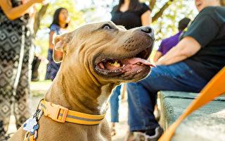 凶犬咬人被罰 越來越多狗主人為狗打官司