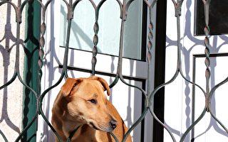 失踪小狗自行返家 用鼻子按门铃告诉主人