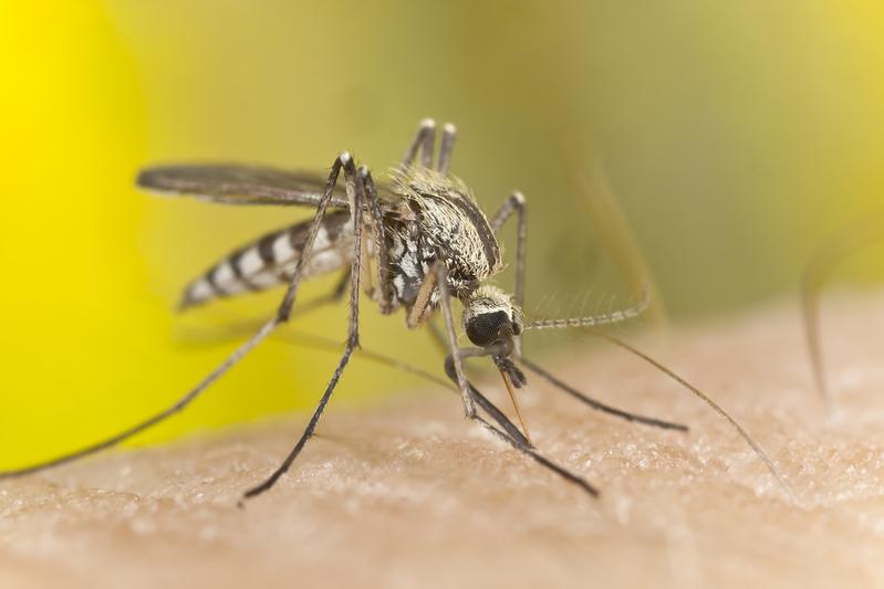 独立日踏青防蚊 避免感染西尼罗河病毒