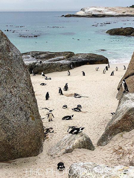 企鵝, 非洲