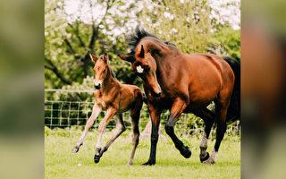 马妈妈产死胎 将生病孤儿小马当自己的宝宝