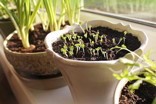 室內盆栽從種子開始種樂趣多 新手也駕輕就熟