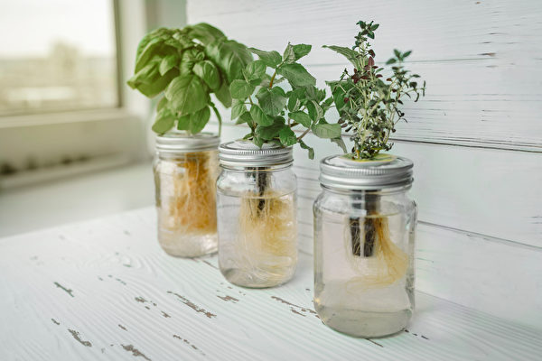 seeds in small space