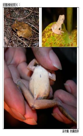 「蛙蛙調查隊」出動,任務完滿結束。