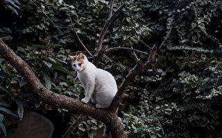 主人救猫咪反双双困树上下不来 消防队救助
