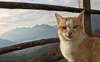 治愈之旅:一岁猫咪随主人攀遍48座最高峰