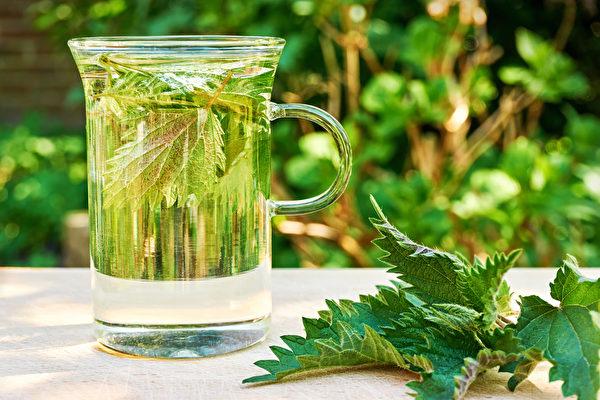 蕁麻葉能抗發炎、利尿、保護攝護腺、滋養血液、淨化身體。(Shutterstock)