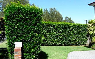 花园地面硬化 绿化真假草之作用