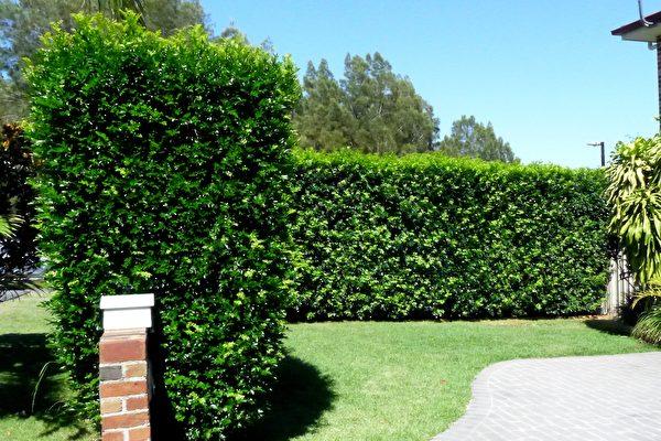 花園地面硬化 綠化真假草之作用