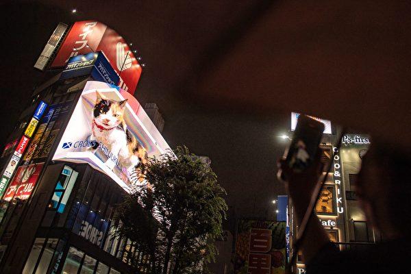 """日本东京高楼上惊现""""巨猫"""" 吸引路人眺望"""