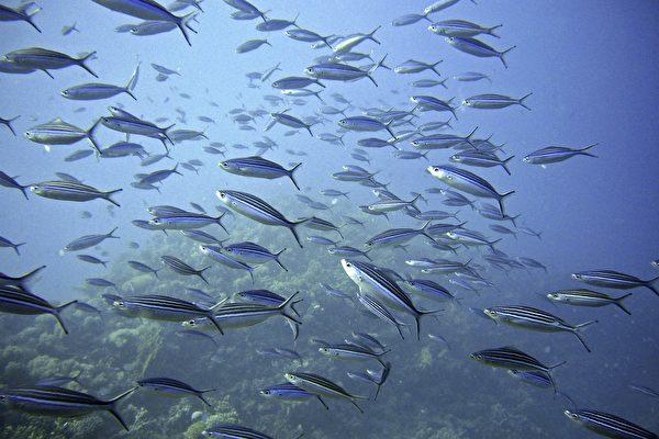 魚類或其他海洋動物會不會淹死?