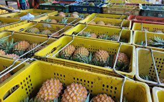 穩定花東鳳梨價格 農糧署收購加工啟動