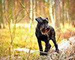 小狗走失10年離家千里 美飛行員駕機送牠回家