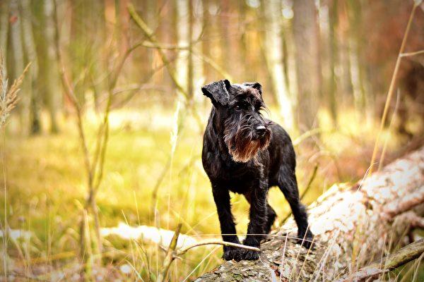 小狗走失10年离家千里 美飞行员驾机送它回家