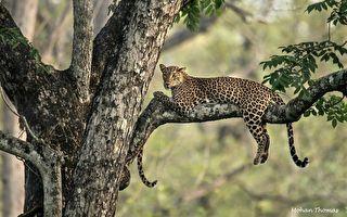 視力測驗:你能找到藏在樹枝間的幼豹嗎?
