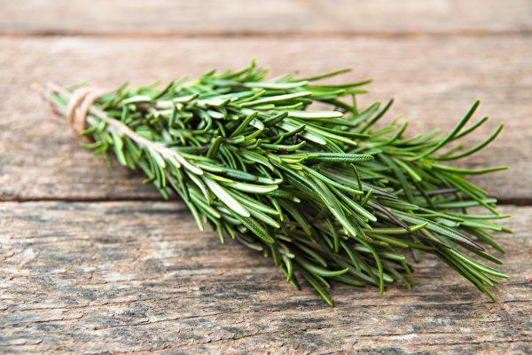 一些芳香药草可以帮助你增强记忆,改善健忘失智和失眠。(Shutterstock)
