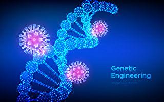 研究:基因編輯工具阻斷中共病毒傳播