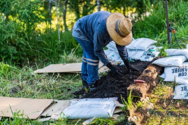 Gardener,Spreading,Compost,As,He,Prepares,A,New,No,Dig,堆肥,土壤,土質改良