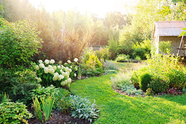 Summer,Private,Garden,With,Blooming,Hydrangea,Annabelle.,Curvy,Lawn,Edge,