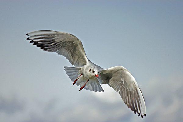 高速弹射升空 美国少女玩游乐设施被海鸥撞到