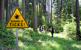 加拿大蜱蟲氾濫 民眾謹防萊姆病