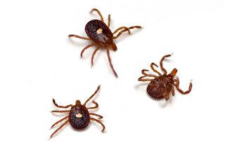 蜱蟲氾濫 如何防範 被叮咬後怎麼辦